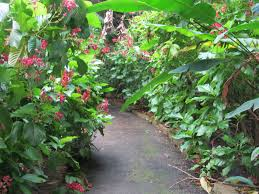Image result for flamingo gardens