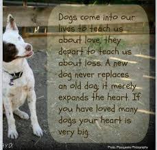Dog quotes | Pet Loss | Pinterest