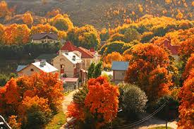 Image result for fall leaves color