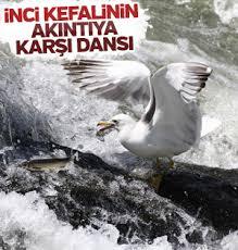 Adana'da uyuşturucu can aldı