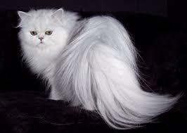 Inilah Sebabnya Kenapa Kucing Menoleh Ketika Dipanggil puss