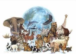 Resultat d'imatges de foto animales libres