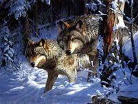 животные: лучшие изображения (657) | Животные, Милые ...