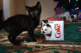 moments of happiness from our readers the coca cola company twelve pack of cats