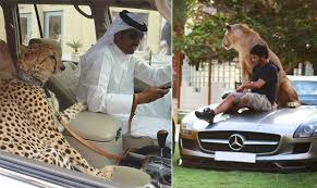 Image result for dubai pets in car pic