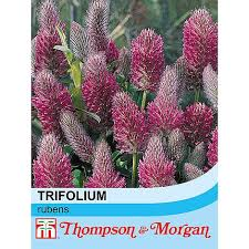 Trifolium rubens seeds | Thompson & Morgan