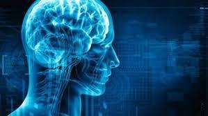 Resultado de imagen para cerebro humano
