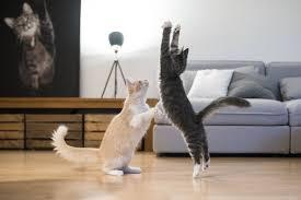 Animal Medical Hospital Blog – Charlotte, NC | Stalking <b>Cool Cat</b> ...