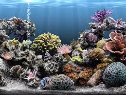 أكبر تجميع لأجمل صور من اعماق البحار (سبحان الله الخالق العظيم) Images?q=tbn:ANd9GcQtdI2UeoKShTxXSyBIMsEa3IsjK1dq8kfKzEIotFIjaL-TB40d