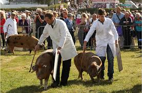 Image result for The Royal Berkshire Show                         2015