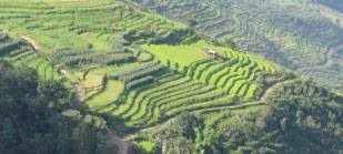 China's smallholders go <b>nuts over organic</b> produce | World ...