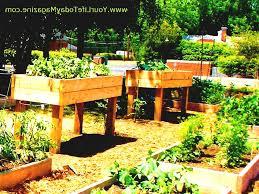 Small Picture Gardening Small Decor On Garden Design Ideas Photos For Gardens