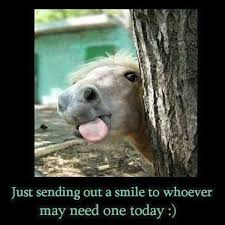 sending out a smile funny quotes cute memes animals quote smile ... via Relatably.com