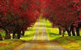 red trees autumn road beautiful hd wallpaper beautiful 3d nature wallpaper1 hd wallpapers