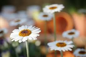 200,000+ <b>Flower</b> Images & Pictures [HD] - Pixabay