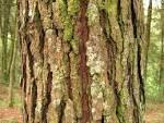 Images & Illustrations of bark