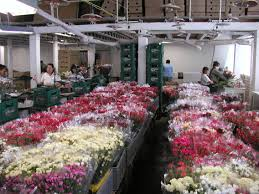 flowers royers flowers coupon camp hill pa royers flowers and gifts from south america love 1 full size