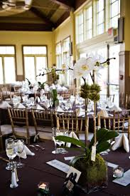 day orchid decor: living orchid plant centerpiece this is similar to the way we dress up the orchids i also liked the way the moss looked in the vase and wanted you to see