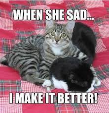 9 Magnificent Meme Monday Cat Memes - Petcentric by Purina via Relatably.com