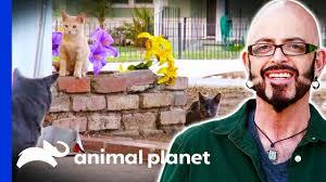 Jackson Helps A Neighbourhood With Their <b>Feral Cat</b> Problem   My ...