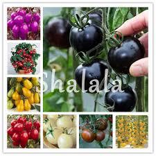 120 <b>Pcs</b> Red and White <b>Dahlia</b> Bonsai Beautiful Perennial Flower ...