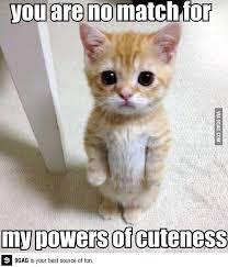 9GAG - Surrender Human   Adorable Animals   Pinterest   Shrek ... via Relatably.com