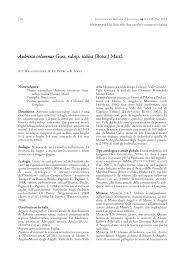 (PDF) Aubrieta columnae Guss. subsp. italica (Boiss.) Mattf.. In ...