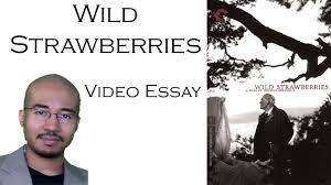 into the wild essay questions  into the wild essay topics writing assignments bookrags com