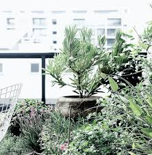 In the concrete and steel <b>jungle</b> of city... - Hills <b>Home Living</b> | Facebook