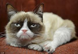 Puggle earl becomes the new grumpy cat after internet falls in ... via Relatably.com