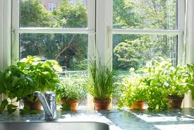 Kitchen Herb Garden Design Garden More Design Indoor Herbs Garden Ideas As One Of The