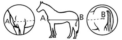 Image result for horse rug measurement chart