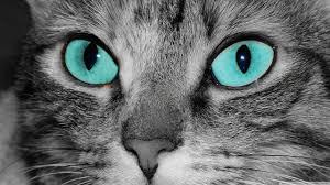 Smokewhisper ~Feirce Half-Clan Cat~ Images?q=tbn:ANd9GcQvOpKypKrvZQW9IuKerS2cEn47Knnc-TJ0m_1n7MGpkXLFaKgn0w