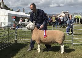Upper Cornquoy's Cheviot ewe is named <b>supreme sheep</b> champion ...