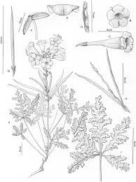 Bignoniaceae: Part II (Tribe Tecomeae)
