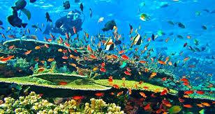 Hasil gambar untuk rinca diving