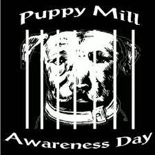 Puppy Mill Awareness Day – Are you aware?