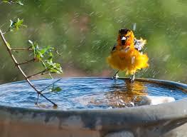 Resultado de imagen para colorful birds images