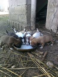 Thirsty <b>puppies</b>... | Animals beautiful, Dogs, Dogs and <b>puppies</b>