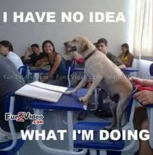 "Likable on Twitter: ""What Am I Doing Here Funny Dog Meme http://t ... via Relatably.com"