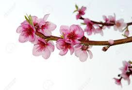 Image result for flower branch