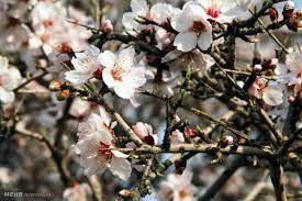 به بهار بگوئید