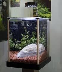 fluval spec aquarium office desk aquarium