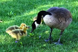 Bildergebnis für Muttertag - kostenlose Fotos