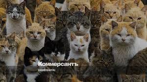 <b>Кот здесь власть</b> – Фото – Коммерсантъ