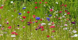 Image result for images wildflower garden