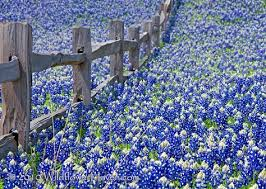Image result for flooded fences in texas