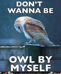 Sad-Owl-Meme-Feels-The-Loneliness-Of-A-Cold-Night.jpg via Relatably.com