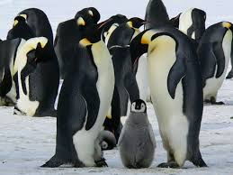 1,000+ Free <b>Penguin</b> & Animal Images - Pixabay