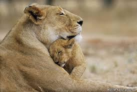 Любите Маму- ведь она одна на свете